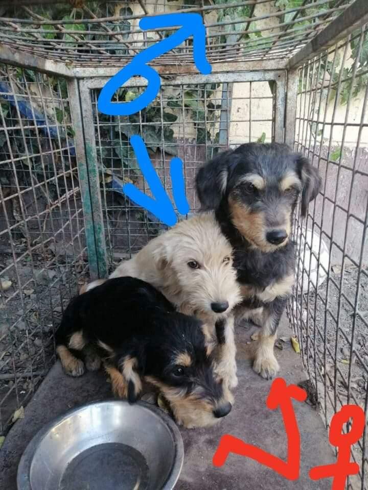 La fourrière de Backa Topola - situation Juin 2019 - - Page 4 Recei136