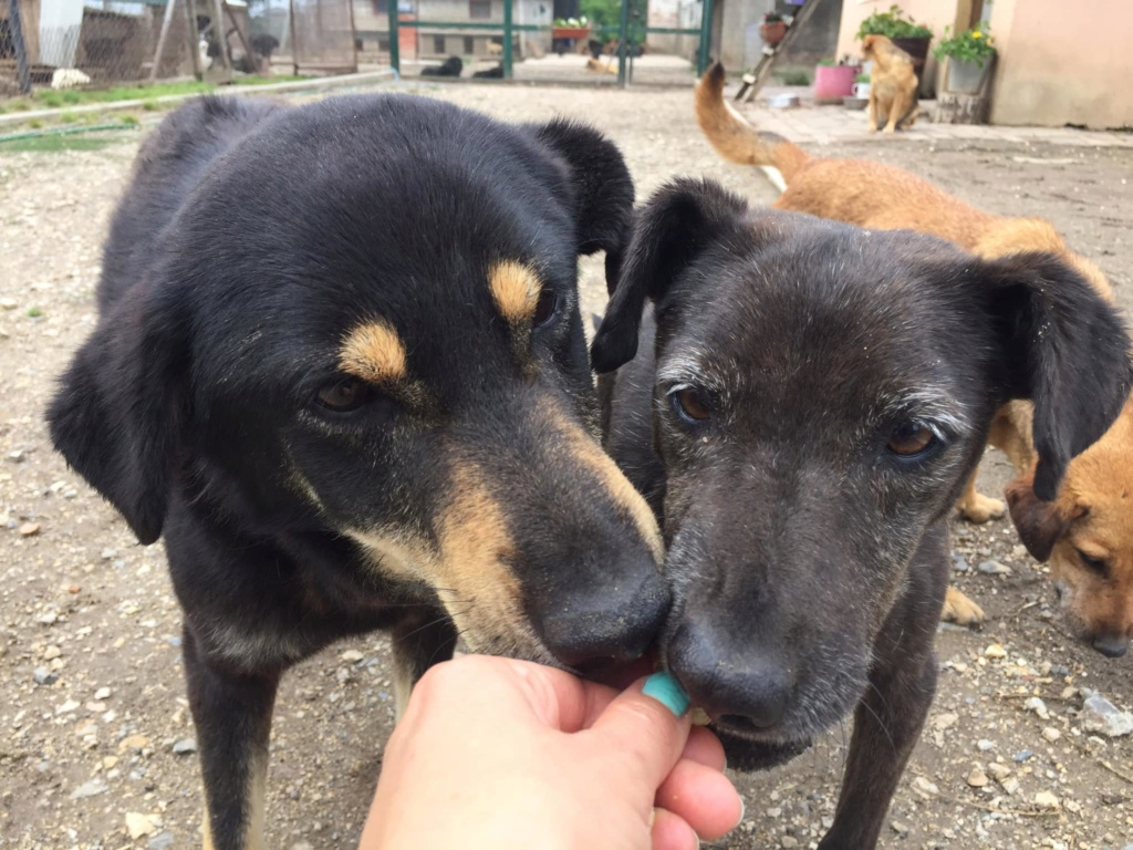 srechko - SRECHKO - Né avril 2017 - 17 kg - Un petit chien parfait (BELLA) - Prêt à voyager en nov 2020 Srechk13