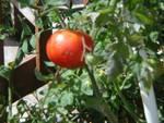 PNW Harvest Beefma12