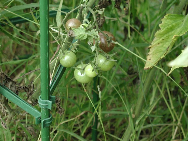 PNW Harvest Chocol10