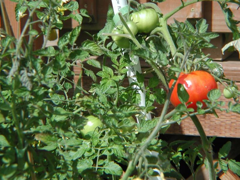 PNW Harvest P1010010