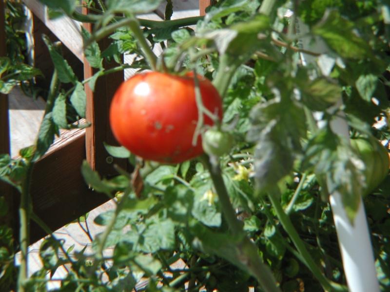 PNW Harvest P1010011