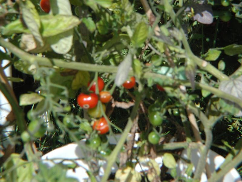 PNW Harvest P1010013