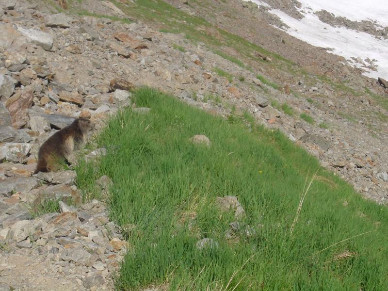 La faune du massif Lacs_b10