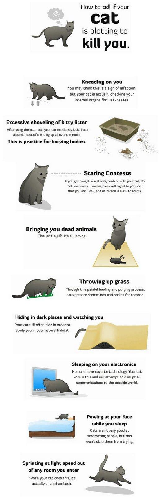 Funny pics Cat_ho10