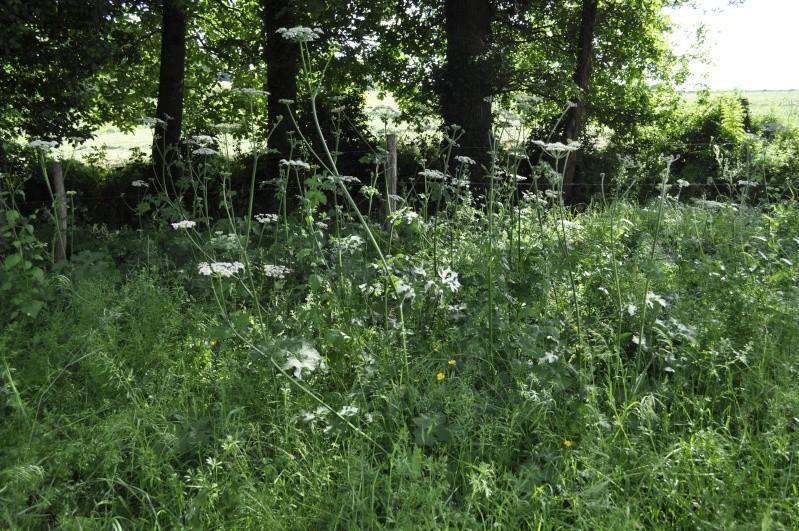Les plantes toxiques pour les chevaux _dsc0113