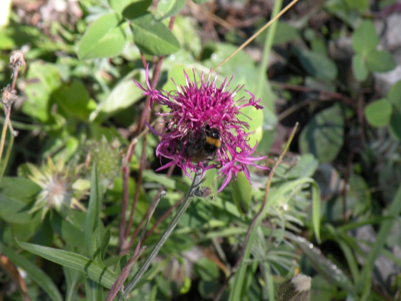 Papillons et abeilles Dscn1812