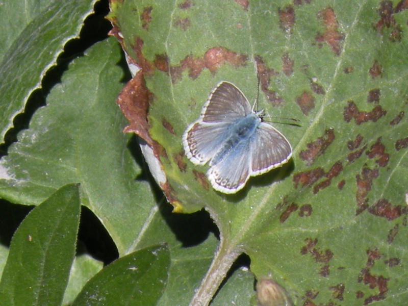 Papillons et abeilles Dscn1813