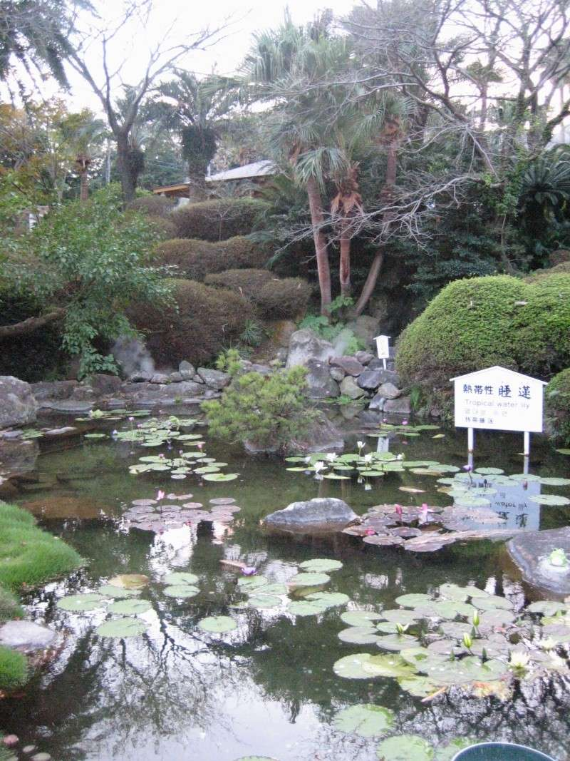 Nihon no shashin Img_5513