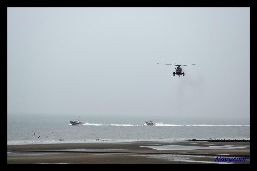 dernier vole et adieu de seaking (Wenduine) Dsc_0027