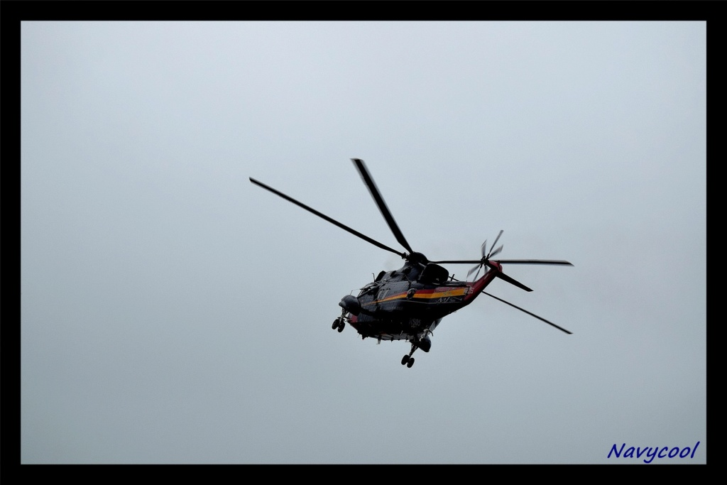 dernier vole et adieu de seaking (Wenduine) Dsc_0031