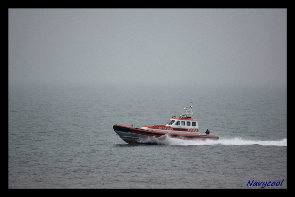 dernier vole et adieu de seaking (Wenduine) Dsc_0034