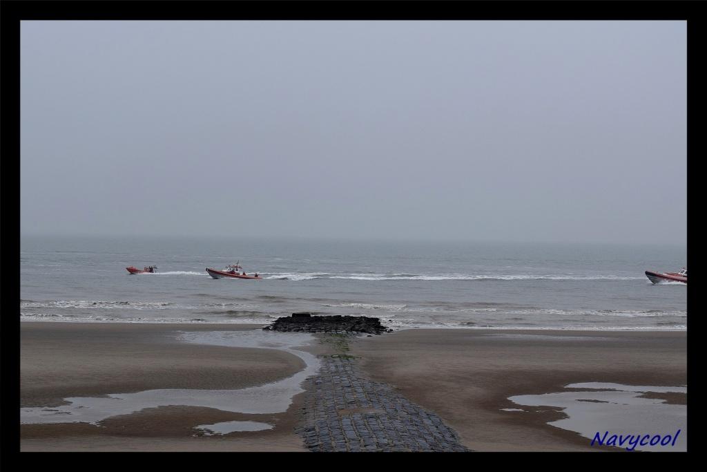 dernier vole et adieu de seaking (Wenduine) Dsc_0043