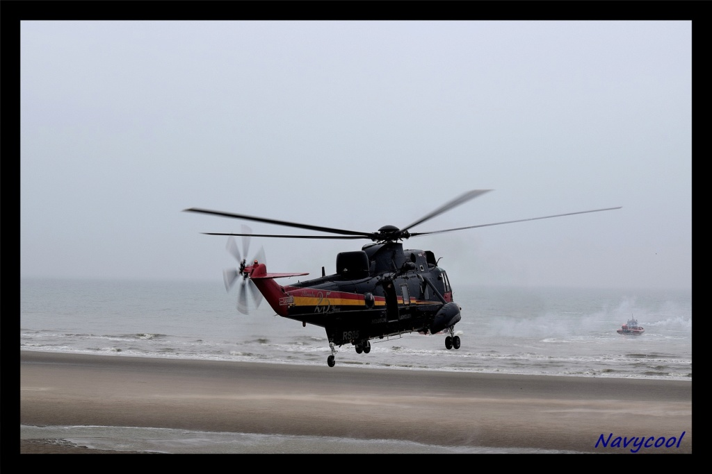 dernier vole et adieu de seaking (Wenduine) Dsc_0046