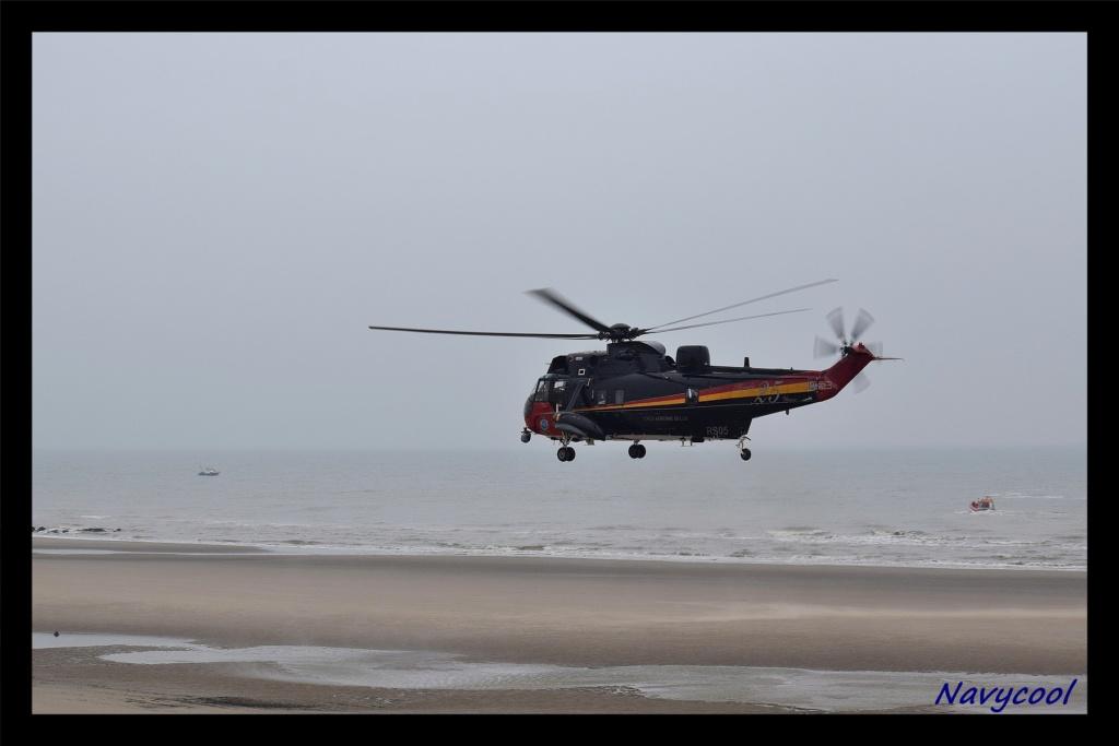 dernier vole et adieu de seaking (Wenduine) Dsc_0052