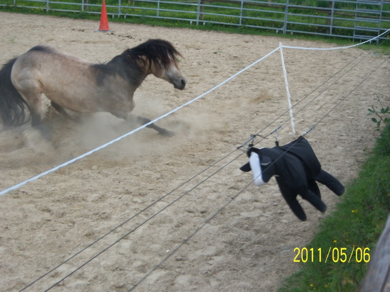 étalon quarter horse 100_2710