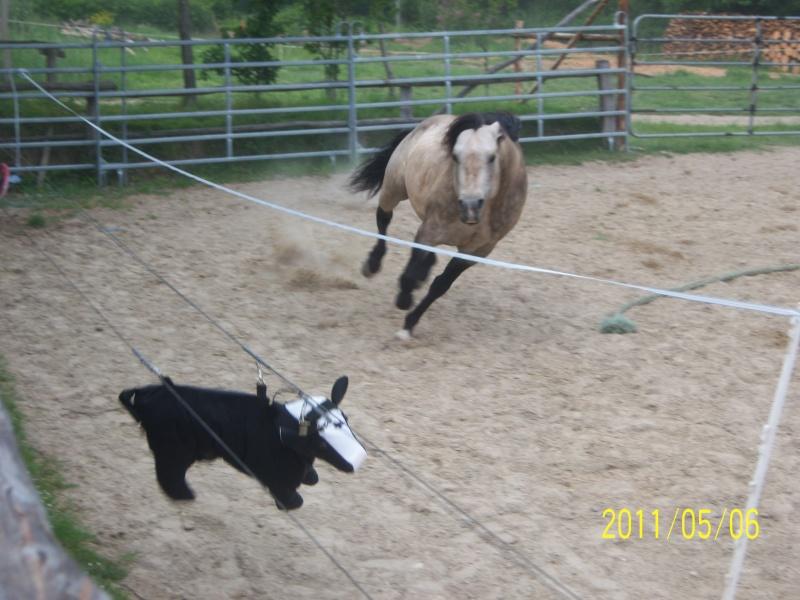 étalon quarter horse 100_2711
