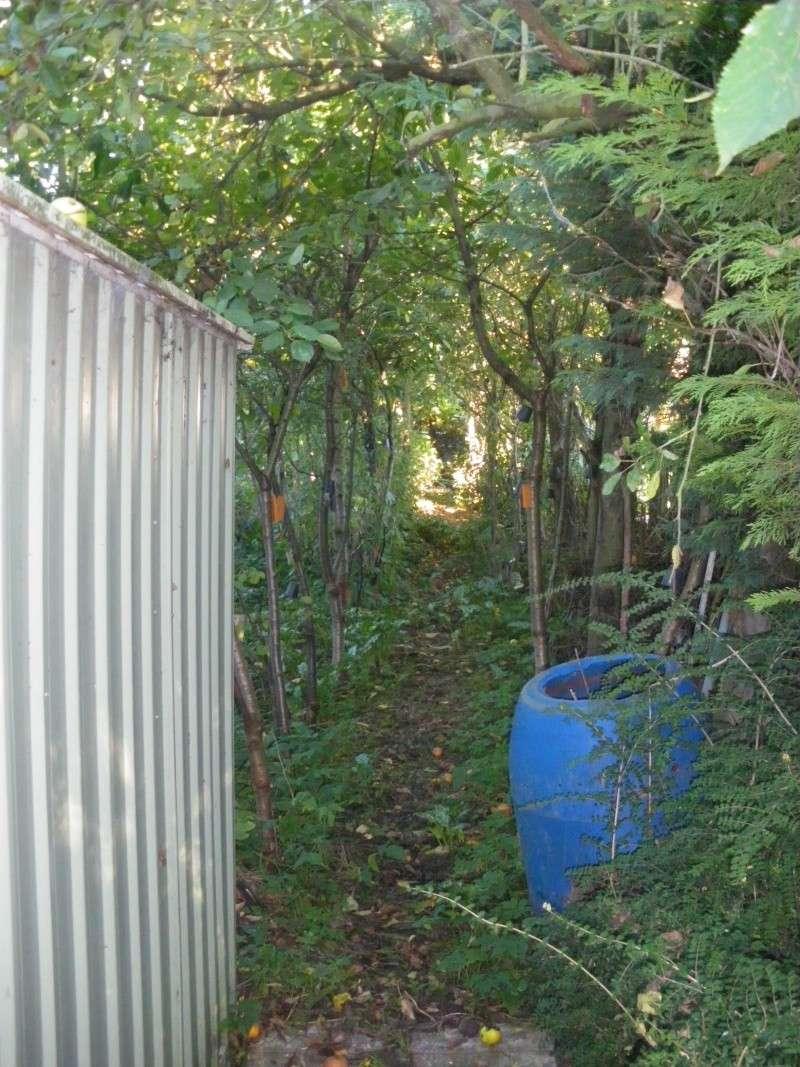 Sur 2000m2 - Le fabuleux jardin des Fraternités Ouvrières, ou comment cultiver une petite jungle? Imgp1513
