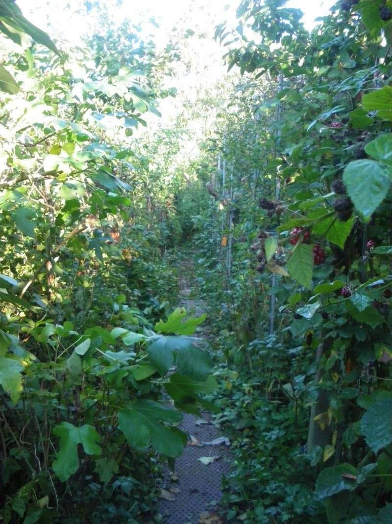 Sur 2000m2 - Le fabuleux jardin des Fraternités Ouvrières, ou comment cultiver une petite jungle? Imgp1514