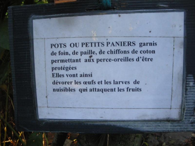 Sur 2000m2 - Le fabuleux jardin des Fraternités Ouvrières, ou comment cultiver une petite jungle? Imgp1517