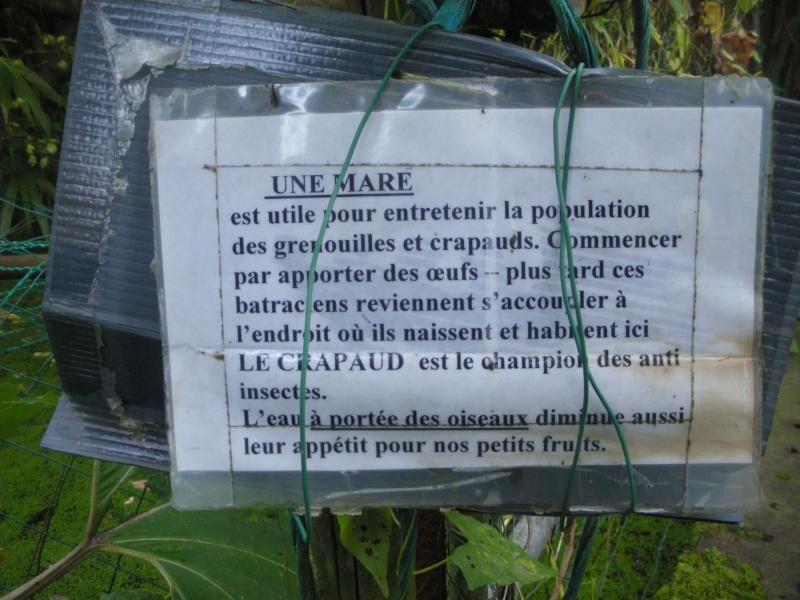 Sur 2000m2 - Le fabuleux jardin des Fraternités Ouvrières, ou comment cultiver une petite jungle? Imgp1520