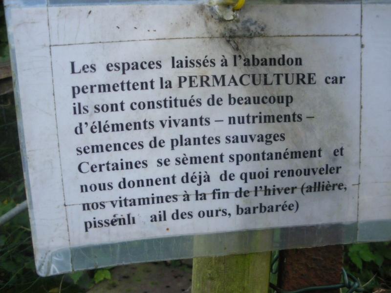 Sur 2000m2 - Le fabuleux jardin des Fraternités Ouvrières, ou comment cultiver une petite jungle? Imgp1521