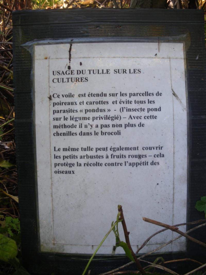 Sur 2000m2 - Le fabuleux jardin des Fraternités Ouvrières, ou comment cultiver une petite jungle? Imgp1522