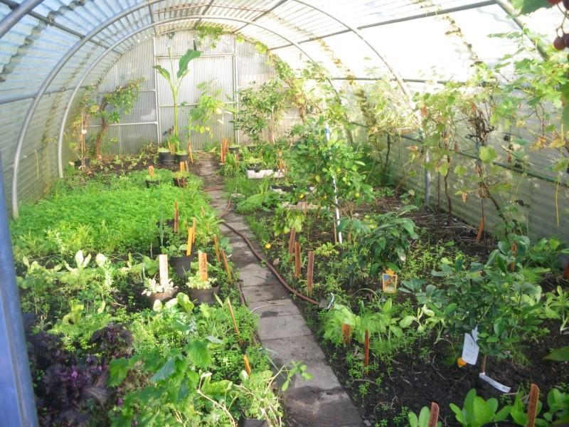 Sur 2000m2 - Le fabuleux jardin des Fraternités Ouvrières, ou comment cultiver une petite jungle? Imgp1525
