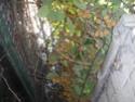Sur 2000m2 - Le fabuleux jardin des Fraternités Ouvrières, ou comment cultiver une petite jungle? Imgp1510