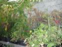Sur 2000m2 - Le fabuleux jardin des Fraternités Ouvrières, ou comment cultiver une petite jungle? Imgp1511