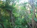 Sur 2000m2 - Le fabuleux jardin des Fraternités Ouvrières, ou comment cultiver une petite jungle? Imgp1515