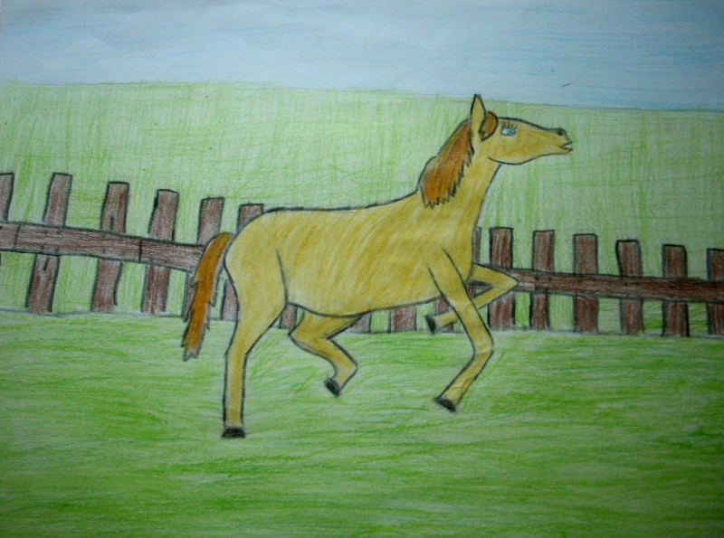 Horse Dscn0713