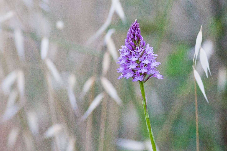 Orchidea? Img_9513