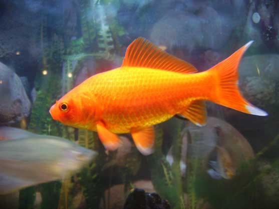 Hugo, le poisson rouge ? 6_pois10