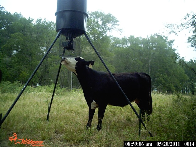 Trail Cam pictures Ch_111