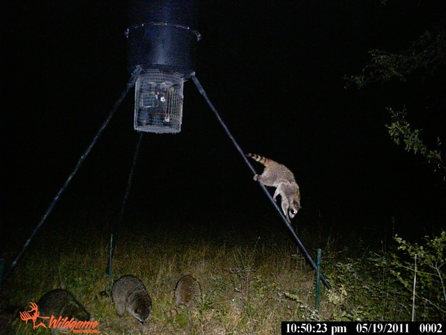 Trail Cam pictures Ch_210