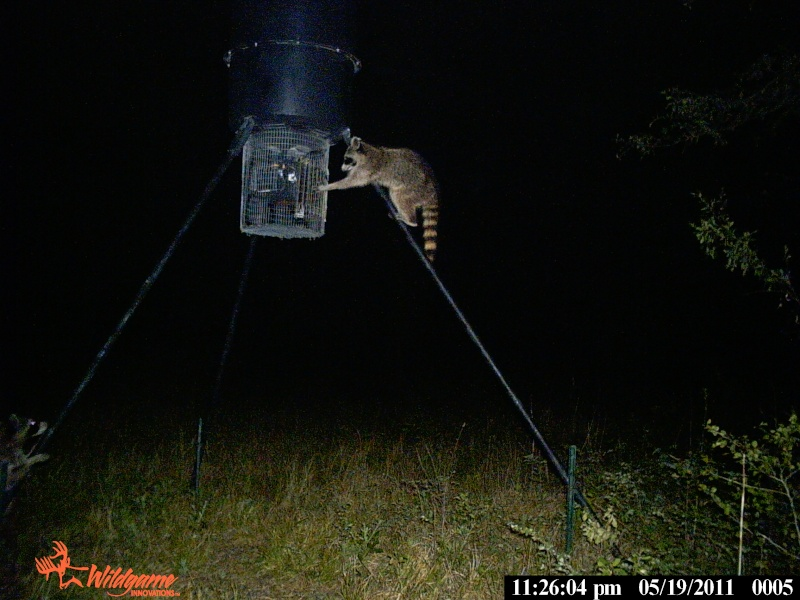 Trail Cam pictures Pack_110