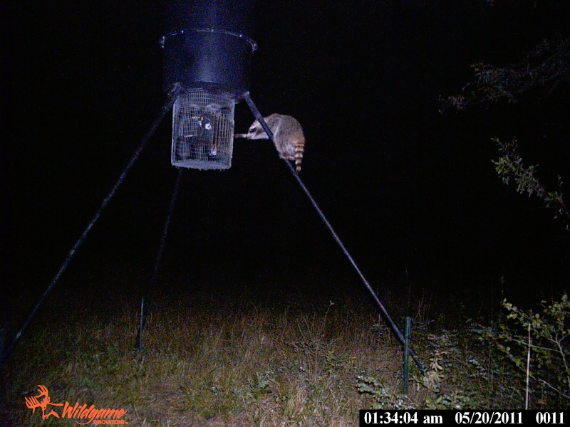 Trail Cam pictures Pack_111