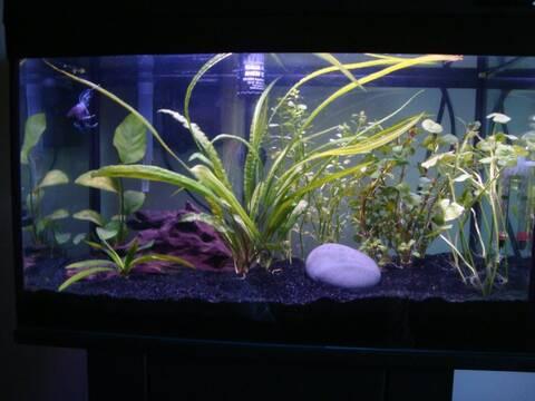 Engrais Pour Aquarium Fait Maison | Ventana Blog
