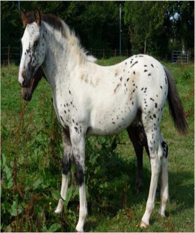 2 poneys, 2 ans dans le 27  Poney110