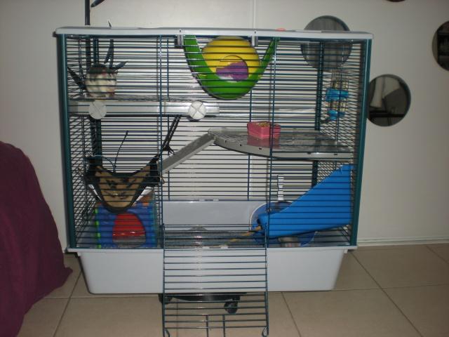 Photos de vos cages Dscn1011
