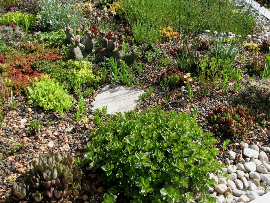 unser Kiesgarten - Seite 5 Dachga10