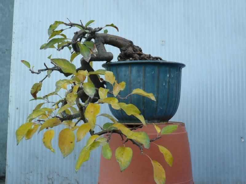melo a cascata - Melo da seme in cascata. 2dgs0a10