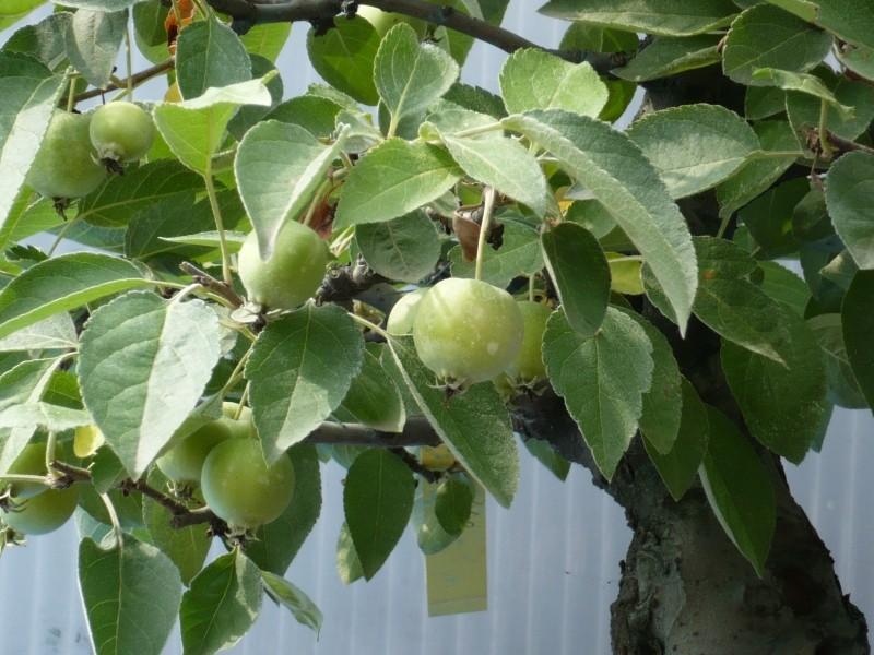 Un melo strano P1030312