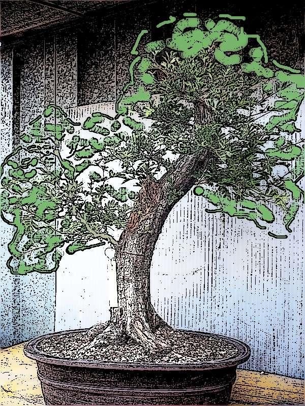 Un biancospino che diventa bonsai...... P1050636