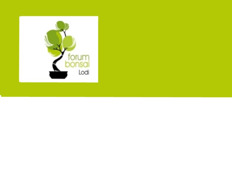 Nuovo logo - Pagina 3 P1050715