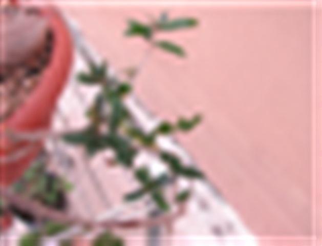Sos Ulivo. Foglie mangiate-rosicchiate Olivo_32