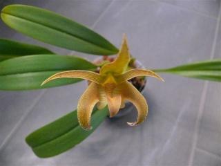 Orchideenblüten 2011 P1090811