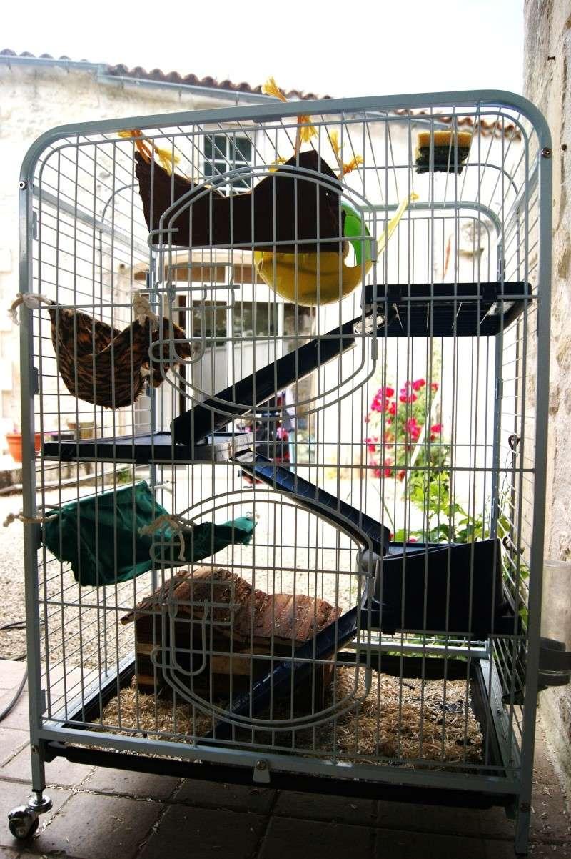 Photos de vos cages - Page 5 Dsc00110