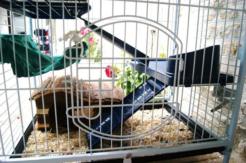 Photos de vos cages - Page 5 Dsc00112
